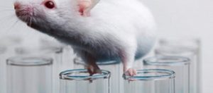 ποντικι πειραματοζωο
