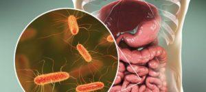 βακτήρια παχέος εντέρου
