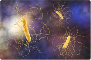 Η ψευδομεμβρανώδης κολίτιδα κάτω από το μικροσκόπιο